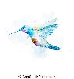 watercolor, colibri, vogel