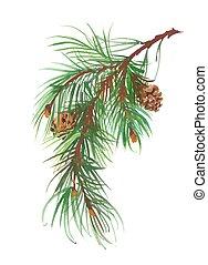 Watercolor coniferous branch with pine cones. - Watercolor...