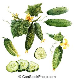 Beautiful vector set with hand drawn vegetable cucumbers