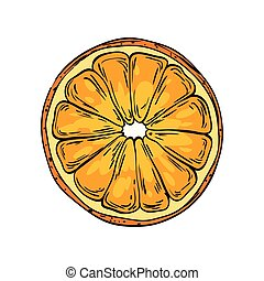 Watercolor eco frut. Line painted orange. Colored line sketch of orange on a white background. Hand drawn fresh food design element in vector