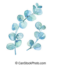 Watercolor eucalyptus leaves and branches. - Illustration ...