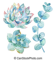 Watercolor eucalyptus leaves and succulents. - Illustration...
