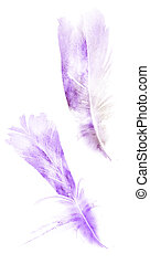 Watercolor feathers, isolated on white background