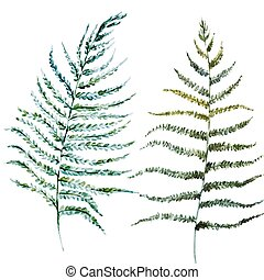 Watercolor fern leaves