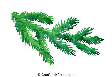 Watercolor fir tree branch