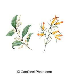 Watercolor floral vector set