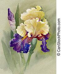 Watercolor Flower Collection: Iris - beautiful iris painted...