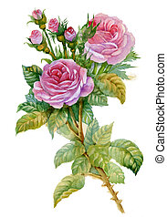 Watercolor Flower Collection: Roses - beautiful pink rose...