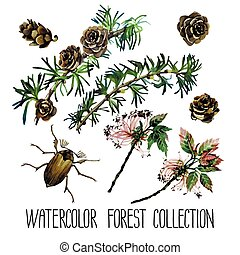 Watercolor forest set. Insects among larch cones and foliage...