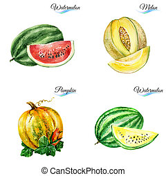 Watercolor fruits on white background for design