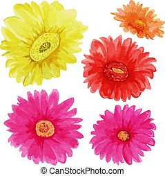Watercolor gerberas. multicolored flowers isolated on white background