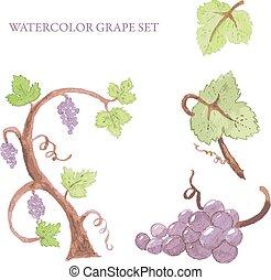 Watercolor grape set