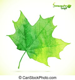 Watercolor green maple vector leaf