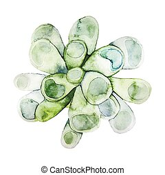 watercolor, groene, succulent