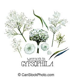 Watercolor gypsophila set. Floral vector design element ...