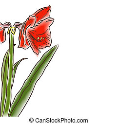 watercolor half amaryllis left side - Flower hand drawn...