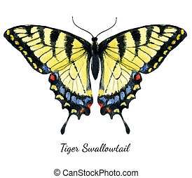 Watercolor hand drawn butterfly
