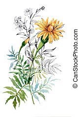 Watercolor hand drawn painting with orange marigolds on white background.
