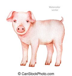 Watercolor hand drawn pig on a white background.