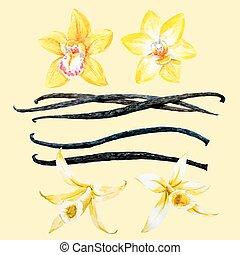Watercolor hand drawn vanilla - Beautiful vector image with...