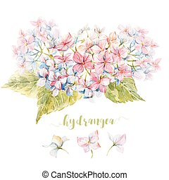 watercolor, hydrangea, komposition