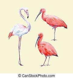 Watercolor ibis and flamingo vector set - Beautiful vector...