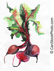 image of beet root on white background. - Watercolor image...