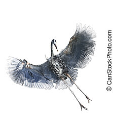 Watercolor Image Of Great Blue Heron - Watercolor Digital ...