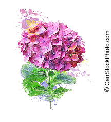 Watercolor Image Of Hydrangea Flower - Watercolor Digital...