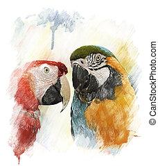 Watercolor Image Of Parrots - Watercolor Digital Painting Of...