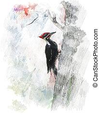 Watercolor Image Of Pileated Woodpecker (Dryocopus pileatus...