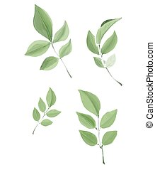 Watercolor isolated vector leaves