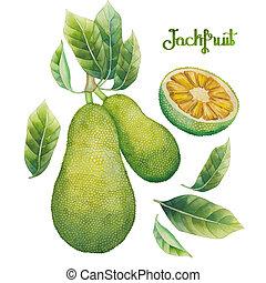 Watercolor jackfruit set. Hand painted exotic plants...