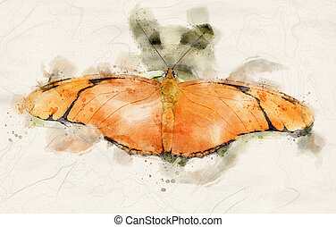 watercolor illustration of a Julia Heliconian (Dryas iulia) butterfly with open wings