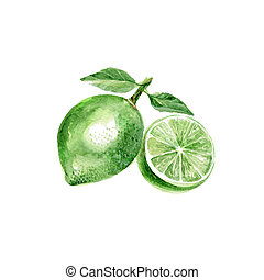 Lime - Watercolor Lime. Hand Drawn Illustration Organic Food...