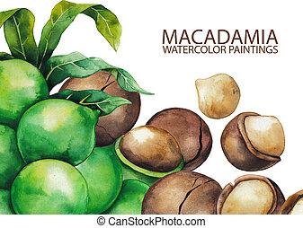 Watercolor macadamia nuts
