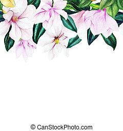 Watercolor magnolia header seamless border, hand drawn