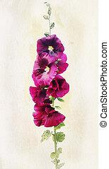 Watercolor malvaflower