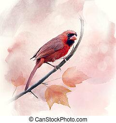 watercolor, mannelijke , kardinaal, noordelijk