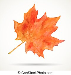 Watercolor maple leaf