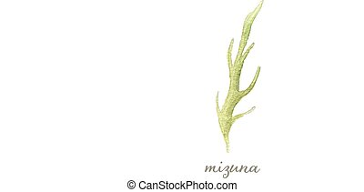 Watercolor mizuna or Japanese mustard