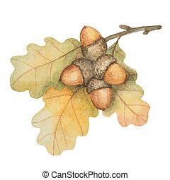 Watercolor oak branch with acorns on a white background for ...