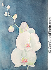watercolor of phalaenopsis orchid, amateur drawing