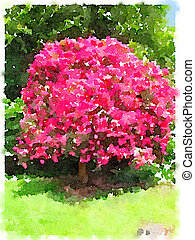 Watercolor of pink Magnolia tree in a park
