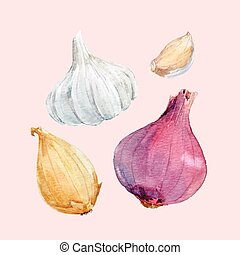 Watercolor onion vector set