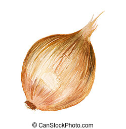 Watercolor onion - Watercolor image of onion isolated on...
