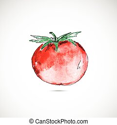 Watercolor  painted  tomato