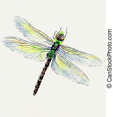Dragonfly - Watercolor Painting of a Dragonfly