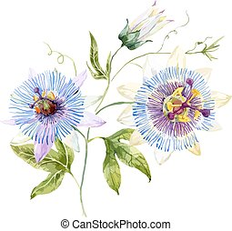 Beautiful image with nice watercolor passion flower