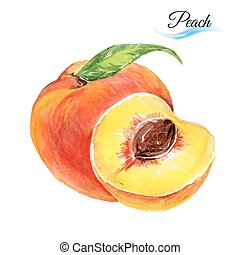 Watercolor peach - Watercolor fruit peach isolated on white...